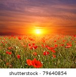 nice sunset on flowers meadow | Shutterstock . vector #79640854