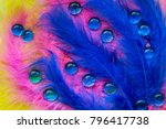 Colorful Feathers And Many Blu...
