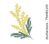 a branch of mimosa on a white... | Shutterstock .eps vector #796481143