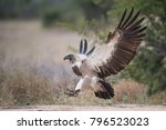 a horizontal  full length ... | Shutterstock . vector #796523023