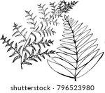 black and white fern... | Shutterstock .eps vector #796523980