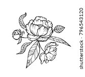 vector peony coloring book page ... | Shutterstock .eps vector #796543120