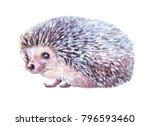 watercolor hedgehog isolated... | Shutterstock . vector #796593460