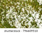 mid high lawn with snow texture.... | Shutterstock . vector #796609510