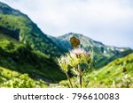 a tattered butterfly on a...   Shutterstock . vector #796610083