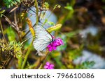 a tattered butterfly on a...   Shutterstock . vector #796610086