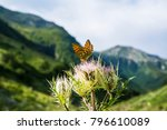 a tattered butterfly on a...   Shutterstock . vector #796610089
