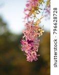 petrea racemosa flower | Shutterstock . vector #796628728