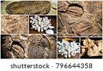 Fossil Trilobite Imprint In Th...