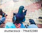 pigeons. a girl is feeding...   Shutterstock . vector #796652380