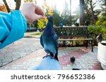 pigeons. a girl is feeding...   Shutterstock . vector #796652386