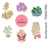 succulent plants on white with... | Shutterstock .eps vector #796667983