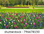 colourful tulips and hyacinth... | Shutterstock . vector #796678150