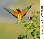 european bee eater  merops... | Shutterstock . vector #79668133