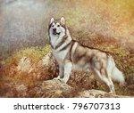 Fluffy Dog Alaskan Malamute...