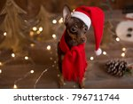 dog russian toy terrier.... | Shutterstock . vector #796711744
