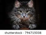 6 month cat | Shutterstock . vector #796715038