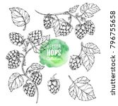 sketches of hop plant  hop on a ... | Shutterstock .eps vector #796755658
