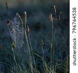 web glistening in the morning... | Shutterstock . vector #796764538