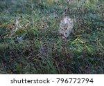 spiders webs glistening in the... | Shutterstock . vector #796772794