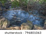 dan river in dan nature reserve ... | Shutterstock . vector #796801063