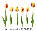 Set Of  Yellow And Red Tulips...