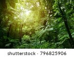 Lush green foliage in tropical...