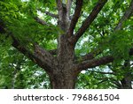 reaching tree branches | Shutterstock . vector #796861504