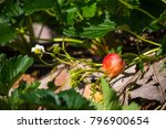 close up of strawberries with...   Shutterstock . vector #796900654