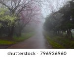 beautiful cherry blossom tree ...   Shutterstock . vector #796936960