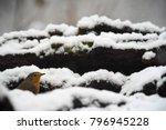 european robin  erithacus... | Shutterstock . vector #796945228