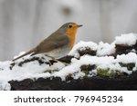 european robin  erithacus... | Shutterstock . vector #796945234
