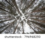 tops of trees  view from the... | Shutterstock . vector #796968250