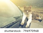 cat on a car in the outdoor | Shutterstock . vector #796970968