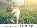 little cat walk and play in the ... | Shutterstock . vector #796971538
