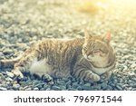 fat tabby cat sit on ground in... | Shutterstock . vector #796971544