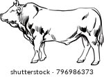 Big Young Bull Cow Meat Beef Stock Vector Royalty Free 796986373