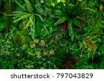 art plate use of green leaves... | Shutterstock . vector #797043829