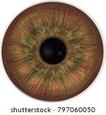 Realistic Vector Ryr Iris....
