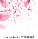 pink sakura falling petals... | Shutterstock .eps vector #797098984