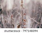 winter frosty plants in frost | Shutterstock . vector #797148394
