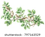 watercolor painting.  hand... | Shutterstock . vector #797163529