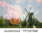 dutch landscape in the spring...   Shutterstock . vector #797187088