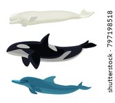 set of dolphin  killer whales
