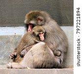 Baboon With Baby Baboon