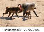 baboon family with baby  | Shutterstock . vector #797222428