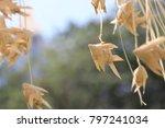 close up ornamental fish hanging | Shutterstock . vector #797241034