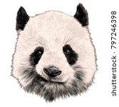 head panda grins sketch vector... | Shutterstock .eps vector #797246398