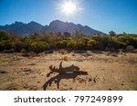 desert scene mountains log...   Shutterstock . vector #797249899