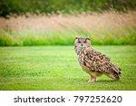 Owls At An Owl Sanctuary